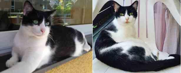 Groß Katze Schwarz Weiß Malvorlagen Ideen - Dokumentationsvorlage ...